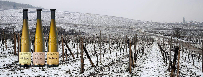 -10% sur nos Alsace Grands Crus Hiver 2019