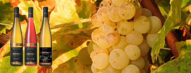 -10% sur une sélection de Vins d'Alsace été 2019